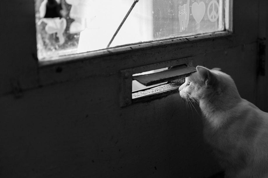 Lugn av ordning och reda – Snygga dörrskyltar